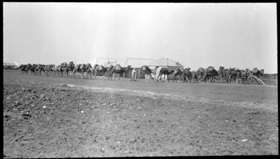 [Camel train at a stop] scenes in the Diamantina area and other general scenes / [John Flynn?]; Flynn, John, 1880-1951; 1912-1951; HL.NL.23084699