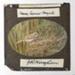 Lantern Slide - 'Tawny Crowned Honeyeater', 1920-1940; J R. Kinghorn; 1920-1940; MV.MM.35961