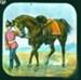 Lantern Slide - Horse Belonging to Dead Soldier; MV.MM.33065