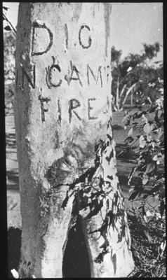 """Dig in camp fire"" carved on a trunk of a tree - Lasseter? a lantern slide used in lectures on all Australian Inland Mission activities, 1940- / [John Flynn?]; Flynn, John, 1880-1951; 1900; HL.NL.17065145"