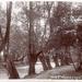 "Postcard: ""Wanstead Park""; ARN0196"