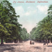 "Postcard: ""The Avenue, Bushwood. Leytonstone"".; ARN0006"
