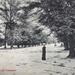 "Postcard: ""Bushwood, Leytonstone""; ARN0021"