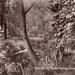 "Postcard: ""Corner of River Roding, Wanstead Park""; ARN0193"