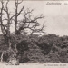 "Postcard: ""Leytonstone the Old Oak, Bushwood""; ARN0258"