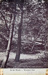 "Postcard: ""In the Woods - Wanstead Park""; ARN0226"