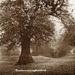 "Postcard: ""Bushwood, Leytonstone""; ARN0036"