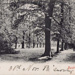 "Postcard: ""The Avenue, Bushwood"".; ARN0011"