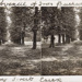 """Stereoscopic postcard: manuscript label """"The Avenue of Trees Bushwood Epping Forest Essex""""; ARN0143"""
