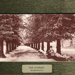 "Postcard: ""The Avenue, Bushwood"""