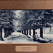 "Postcard: ""The Avenue, Bushwood""; ARN0006"