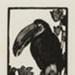 Toucan; Lionel Lindsay (b.1874, d.1961); 1925; 2016.164