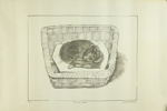 Cats Basket; Charles Blackman (Australian, b.1928, d.2018); 1976; 2012.069.b