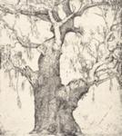 The big tree - Myrtleford; Ian Westacott (Australian, b.1956); 2014; 2015.206