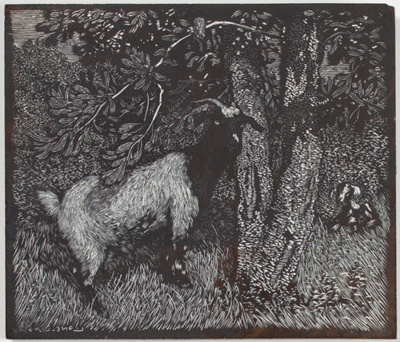 Goat and Banksia (Banksia Tree) [Woodblock]; Lionel Lindsay (b.1874, d.1961); 1924; 2016.134
