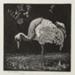 The Crane (The Heron); Lionel Lindsay (b.1874, d.1961); 1925; 2016.161