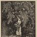 Climbers (The Trellis); Lionel Lindsay (b.1874, d.1961); Circa 1921; 2016.100