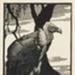 The Indian Vulture; Lionel Lindsay (b.1874, d.1961); 1933; 2016.205