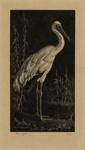 White Stork; Lionel Lindsay (b.1874, d.1961); 1925; 2016.167