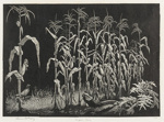 Indian Corn; Lionel Lindsay (b.1874, d.1961); 1936; 2016.186
