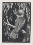 Kookaburra; Lionel Lindsay (b.1874, d.1961); 1923; 2016.124