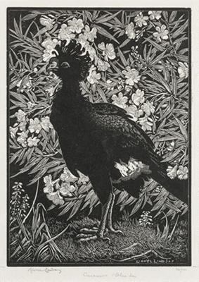 Curassow & Oleander; Lionel Lindsay (b.1874, d.1961); 1932; 2016.172