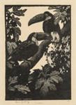 Toucans; Lionel Lindsay (b.1874, d.1961); 1925; 2016.165