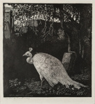 Autumn (The Peacock); Lionel Lindsay (b.1874, d.1961); 1924; 2016.129