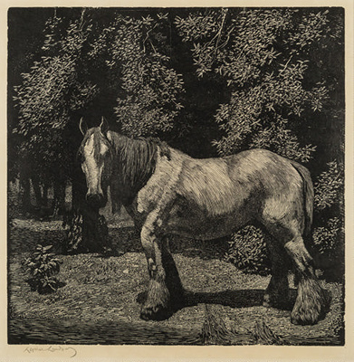 The White Horse; Lionel Lindsay (b.1874, d.1961); 1923; 2016.127