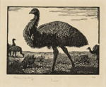 The Emu; Lionel Lindsay (b.1874, d.1961); 1923; 2016.121