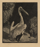 The Pelican; Lionel Lindsay (b.1874, d.1961); 1923; 2016.125