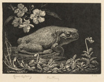 The Garden Frog (The Frog The Bull Frog); Lionel Lindsay (b.1874, d.1961); 1924; 2016.143