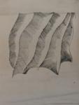 Curtain; Charles Blackman (Australian, b.1928, d.2018); Not Dated; 2012.099