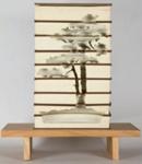 Japanese White Pine; Kylie Stillman (b.1975); 2005; 2015.23
