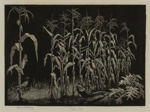 Indian Corn; Lionel Lindsay (b.1874, d.1961); 1936; 2016.187