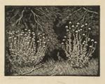 Thistles; Lionel Lindsay (b.1874, d.1961); 1922; 2016.116