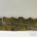 Button stick; ULM ACC 1997 159