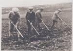 4 men Hoeing a field; ULMPH 2000 0559