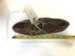 1920's Women's Leather Shoe; Picotee; 1920s; MSCL.2018.08