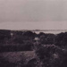Elevated view of Beaumaris bush from roof of Sunnyland; 1921; P0478