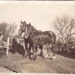 Man with pair of horses, market garden, Cheltenham; 1936?; P5514