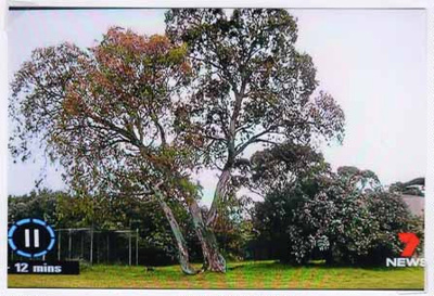 Save 229 Trees demonstration at the site of Sandringham College, Beaumaris Campus; Channel 7; 2016 Oct. 24; P12126