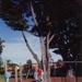 McCutcheon siblings, Sandringham State School grounds; Larson, Janet; 1989; P2729