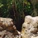 Aboriginal well, Black Rock; Joy, David; 2000 Jan. 17; P3634