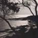 View of Quiet Corner through the trees; c. 1938; P0812