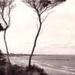 A glimpse through the trees, Beaumaris; 192-?; P4700